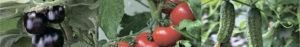 ГроГрин гель вегетатив